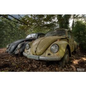 Daan Oude Elferink: Forgotten Beetles