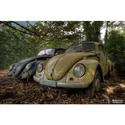 Daan Oude Elferink: Forgotten Beetles