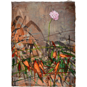 Andrea Damp: Allium schoenoprasum